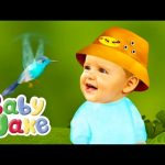 Baby Jake – Hums With The Humming Bird