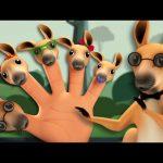 Kangaroo Finger Family   3D Nursery Rhymes For Kids   Songs For Childrens