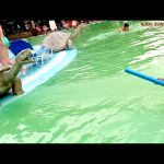Water park funny video. Kids playing with water guns.  Video  2015