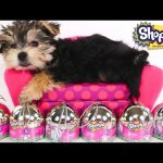 Opening SHOPKINS with ZUMI – 6 Shopkins Surprise Egg Capsule Toys