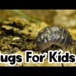 Woodlice For Kids