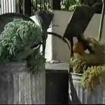 Sesame Street Episode 1316 – Oscar meets Osvaldo