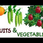 Surprise Eggs Toys Learn Fruits & Vegetables for Kids | ChuChuTV Egg Surprise for Children