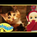Teletubbies Full Episode – Kittens ★ Episode 182 – HD