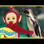 ★Teletubbies English Episodes★ Penguins ★ Full Episode – HD (S06E132)