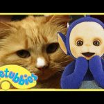 Teletubbies Full Episode – Cat's Night Out