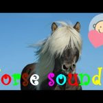 🎧 Horse sounds effect | Horse neighing, riding, racing | Animal sounds for children to learn