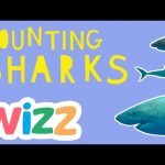 Counting Sharks | Wizz Originals