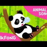 Ni Hao Panda | Panda | Animal Songs | Pinkfong Songs for Children