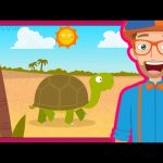 The Tortoise Song by Blippi | Animals for Toddlers