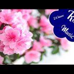 Deep Sleep Music: Relaxing Music for Stress Relief | Calm Music for Sleep, meditation, healing, spa
