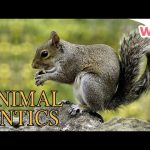 Animal Antics – Animal Friends | Full Episodes | Wizz | TV Shows for Kids