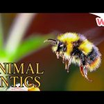 Animal Antics – Bugs & Other Animals | Full Episodes | Wizz | TV Shows for Kids