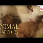 Animal Antics – Breeding Season | Full Episodes | Wizz | TV Shows for Kids
