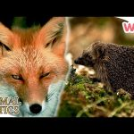 Animal Antics – In the Garden at Night | Full Episodes | Wizz | TV Shows for Kids