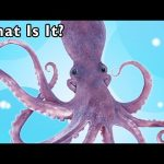 What Is It? + More | MYSTERY ANIMAL RHYMES | Mother Goose Club Phonics Songs